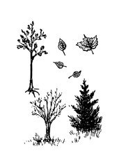 Trees and spruce, vector illustration