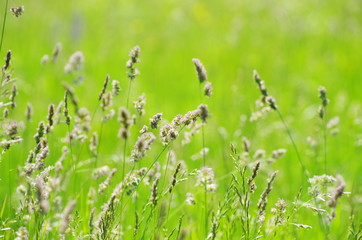 field green grass landscape background