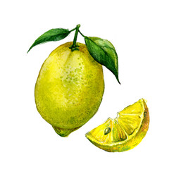 Watercolor lemon isolated