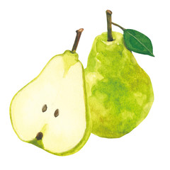 pear. watercolor painting on white background