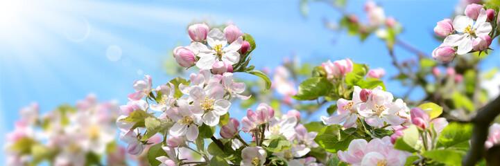 Frühling 360