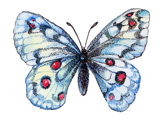 butterfly,watercolor,flying butterfly,white,white butterfly,graphics,