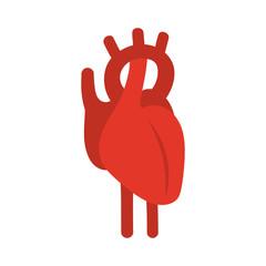 Human red heart symbol. Vector illustration.