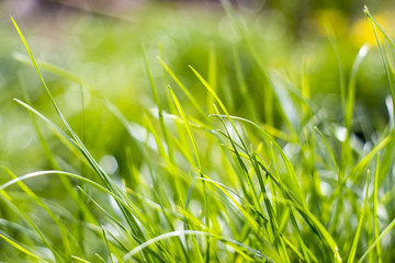 Fresh green grass. Soft Focus. Abstract Nature Background