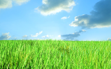the sky and grass background 3D render