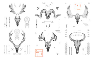 Abstract animal background line art. Skull collection. Antlers.