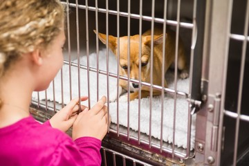 Girl petting chihuahua dog in cage