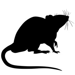 Silhouette of a rat