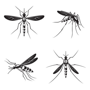 monochrome collection of four mosquito with stinger