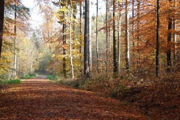 Wunderschöner Herbstweg