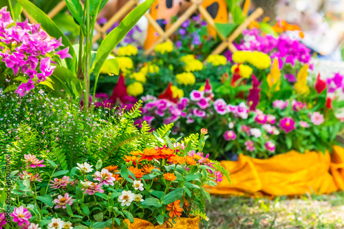 Многолетники цветущие все лето картинки