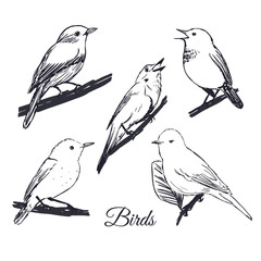 Ink hand drawn birds collection