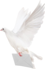 dove with white mail illustration