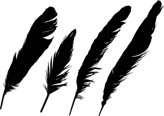 group of four straight black feathers on white