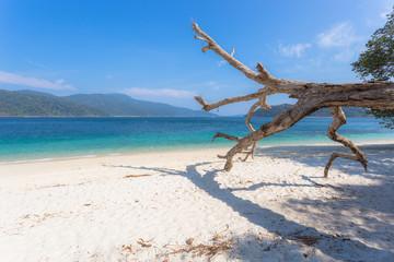 Dead tree standing on the beach. Blue sky sunshine. Paradise island, LIPE Thailand