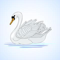 Swan. Aviculture. Vector illustration.