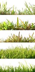Five backgrounds set grass backlit