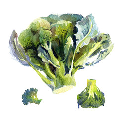 Broccoli isolated, watercolor illustrarion