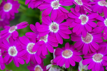 Beautiful Purple Flowers natural background