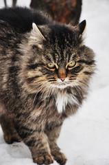 Гроза котов