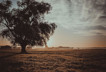 tree in field,summer dawn