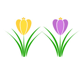 Spring Crocus flower. Vector illustration