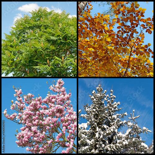 """""""vier jahreszeiten four seasons collage"""" stockfotos und"""
