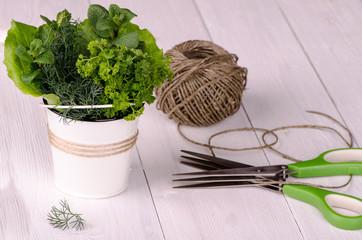 Fresh garden herbs in a white bucket