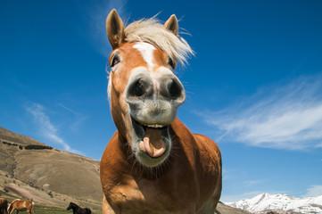 Primo piano di un cavallo pazzo