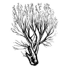 Hand drawn tree silhouette and stump on white background
