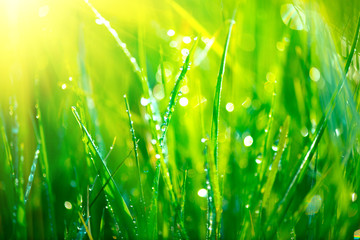 Fotoväggar - Grass. Fresh green grass with dew drops closeup. Abstract nature background