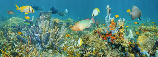 Coral reef underwater panorama with colorful marine life composed by tropical fishes and sea sponges, Caribbean sea