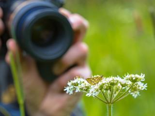 Macro Photographer in action