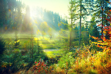 Fototapete - Beautiful morning misty old forest and meadow in countryside. Autumn nature scene