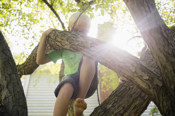 Low angle view of Caucasian boy climbing tree