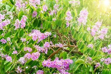 Beautiful flower soft focus, Thai Flower Tabak