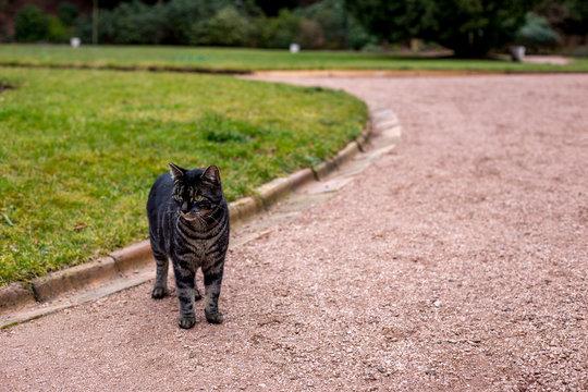 Getigerte Katze in einem Park