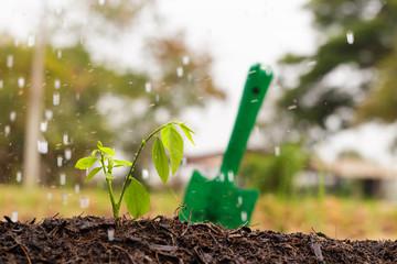 Growth, Plant, Rain.