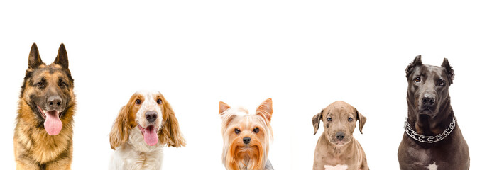 Portrait of five dogs together