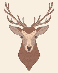 Portrait of deer in color