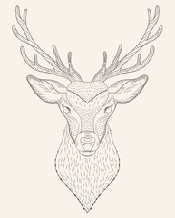 Portrait of deer coloring