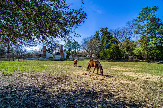 Brown horses near traditional english house in Colonial Williamsburg, Virginia, USA