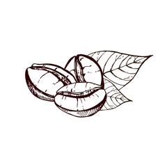 hand drawn ink coffee beans, sketch of coffee beans. vector eps 10