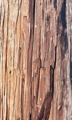 Fototapete - old wooden texture