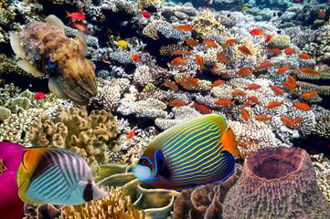 sea life fish underwater landscape maldives