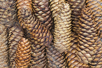 Closeup background texture photo of dried pine cones with natural tone on wooden tray