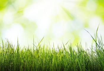 grass in sun light, spring background