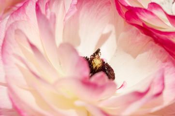 Ragno nel fiore