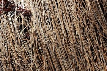 Фон сухой травы