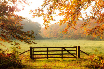 Wooden gate to a meadow with sunlight shining through the trees in a forest during Autumn.